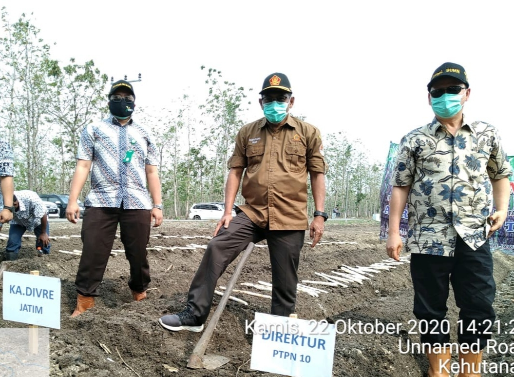 PTPN X Perluas Lahan Tebu Melalui Program Agroforestry