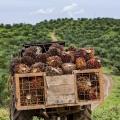 Atasi Deforestasi di Luar Area Konsesi, Nestle Gandeng AAK & Musim Mas